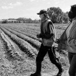 De tierras privadas ociosas a quintas para la producción de alimentos