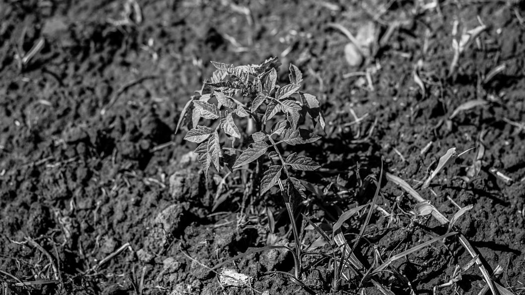malvinas-agroecologicas-mte2