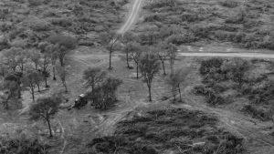 Durante la cuarentena se deforestaron casi 50.000 hectáreas