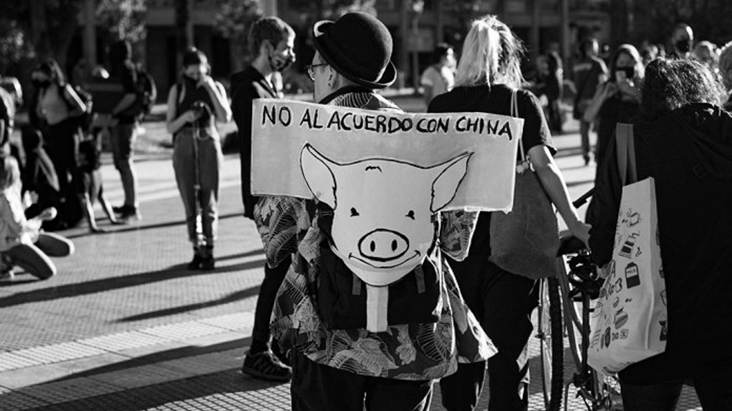 Dia-Internacional-Veganismo-china-cerdos-3