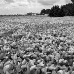 Claves para cambiar el modelo agrario