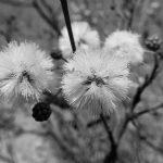 Sobre plantas nativas, diversidad y ecogenesia