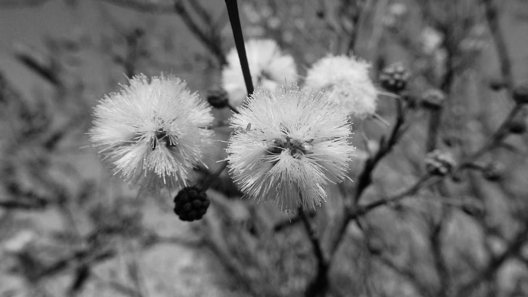 plantas-nativas-diversidad-ecogenesia-San-Marcos-sierras-4