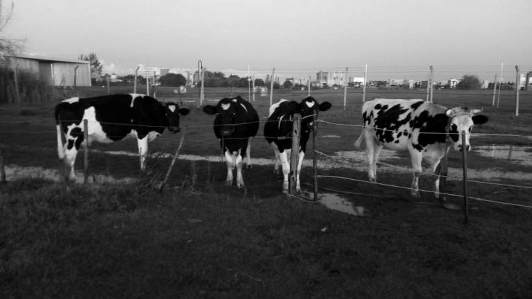 UTT-agroecología-tierra-campo-colonias-agroecológicas-3