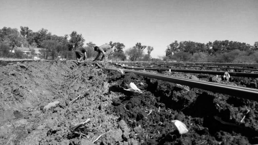 UTT-agroecología-tierra-campo-colonias-agroecológicas-6