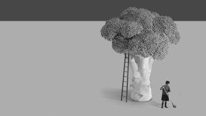 Vikinga Bonsái, cultivar un bonsái propio