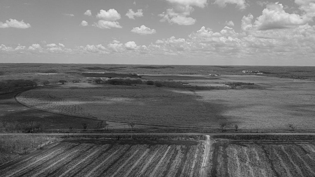 campo-cultivos-transgenico-trigo