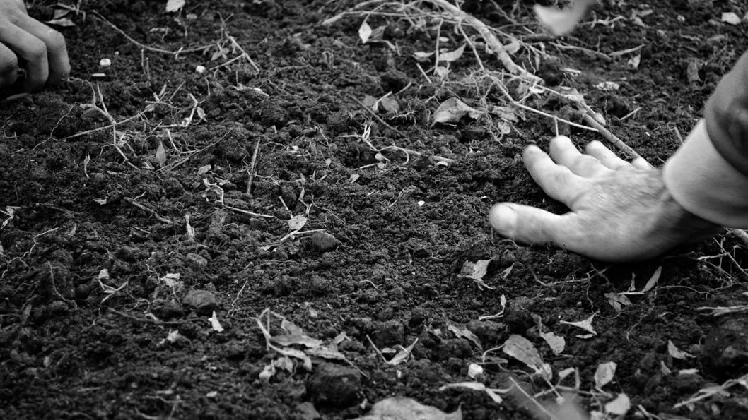 mano-tierra-naturaleza-permacultura