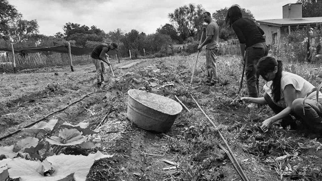 mercadocoop-capilla-del-monte-agricultura