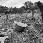 Capilla del Monte aprueba ordenanza de promoción cultural de la agricultura local
