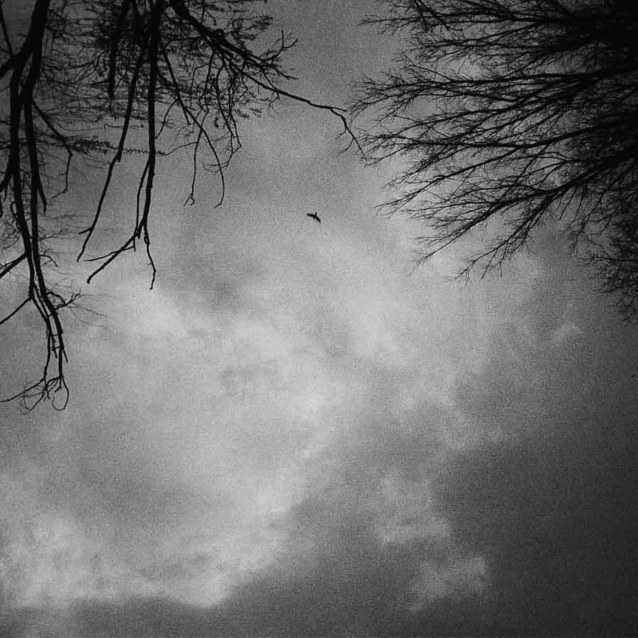 Paisaje-nubes-cielo-arboles-La-tinta