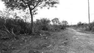 Denuncian desmonte en Bialet Massé y violencia contra la Comunidad Ticas