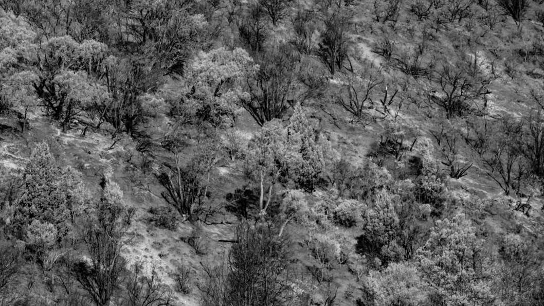 incendio-bosque-Bolsón-Patagonia-2