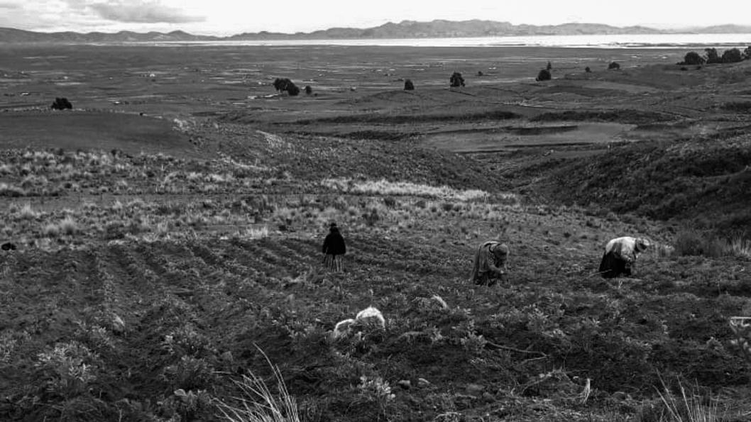 Bolivia-Aditha-Mamani-soberania-alimentacipn-campo-tierra-indígena-aymara