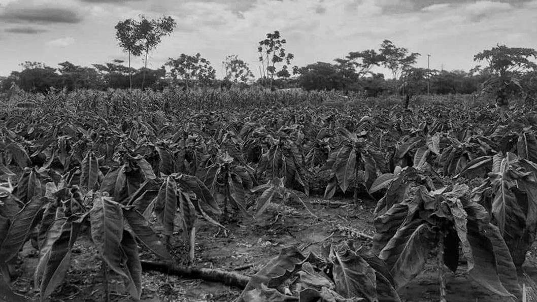 Paraguay-tierra-campo-campesinos-6