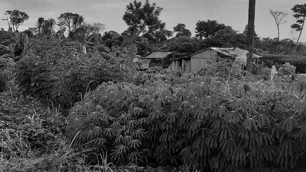 Paraguay-tierra-campo-campesinos
