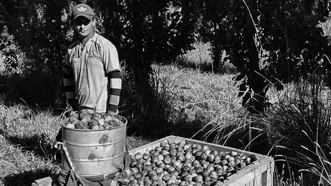 campo-trabajo-productores-tierra-2