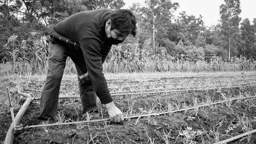 campo-trabajo-productores-tierra-5