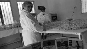Columna de géneros en #DesdeLaGente: la presencia de las mujeres en las cooperativas