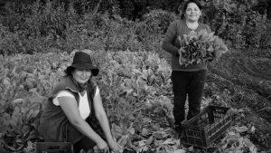 Hortícolas Tarijeños, una apuesta a lo colectivo