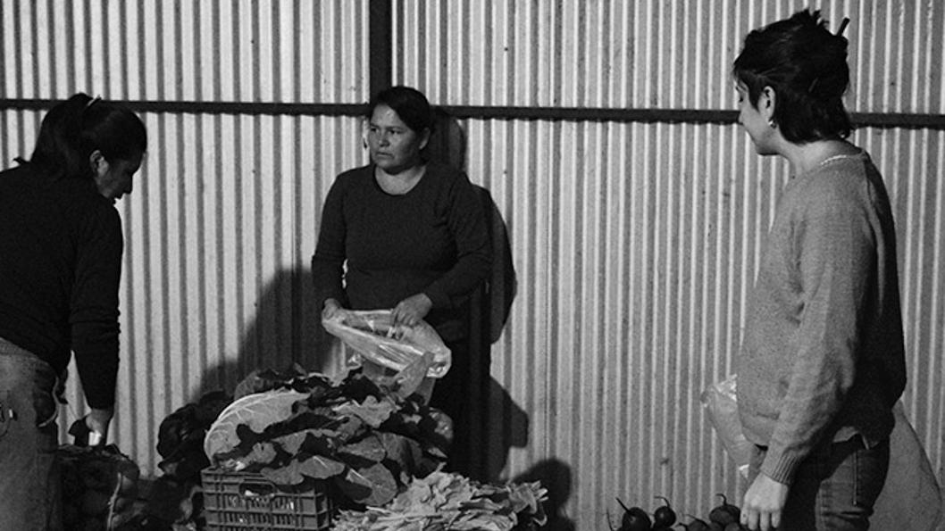 productores-hortícolas-Colonia-Caroya-campo-3