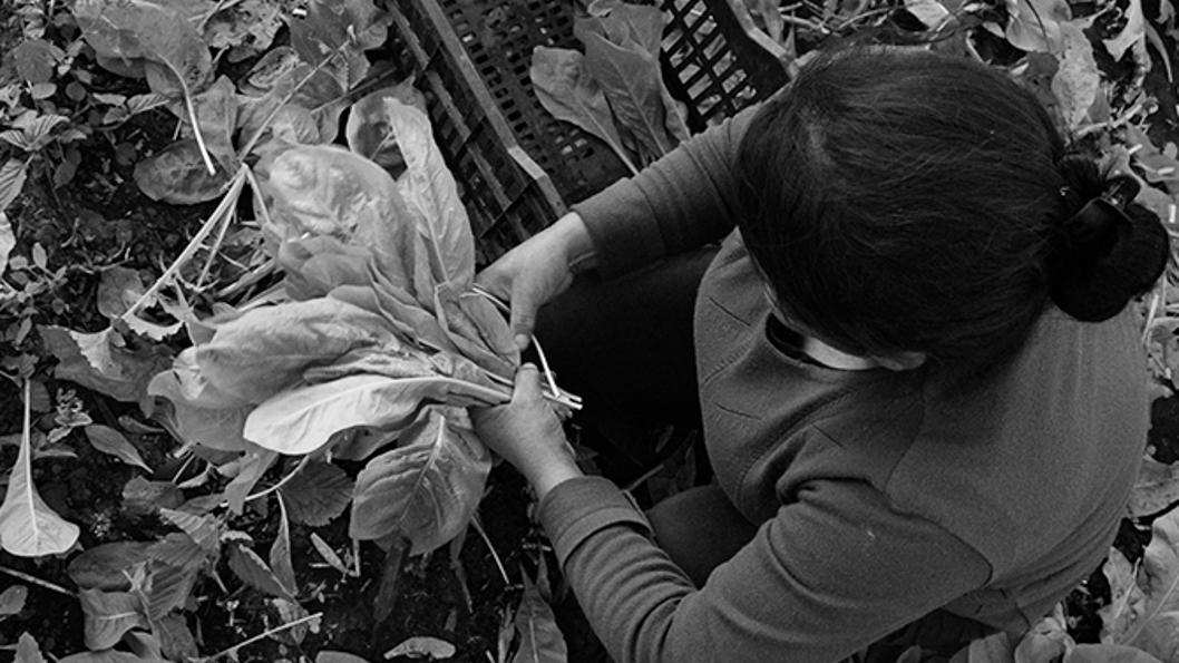 productores-hortícolas-Colonia-Caroya-campo
