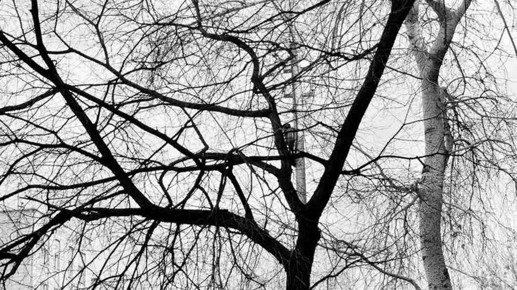 árboles-ramas