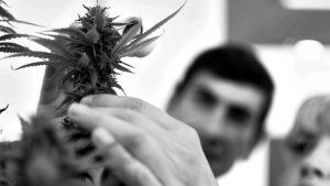 UNLP: luz verde para cultivar cannabis con fines científicos