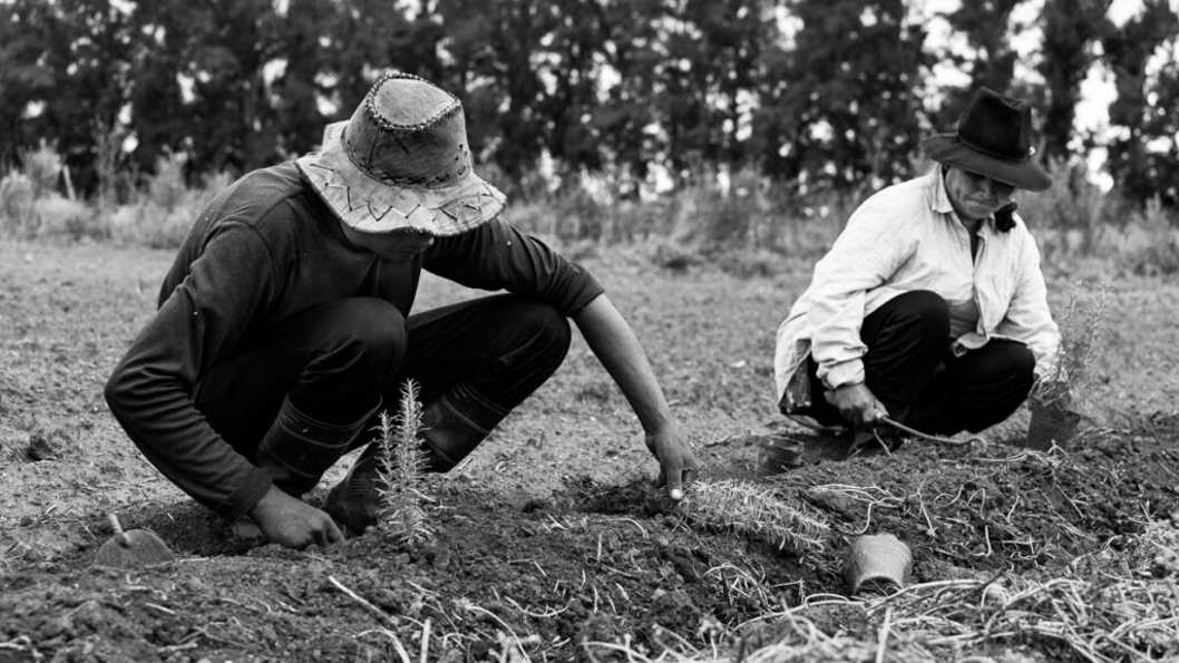 comité-seguridad-alimentación-nutricion-campo-campesinos-productores