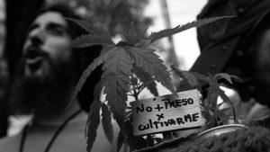 Apuntes sobre la ley de cannabis medicinal
