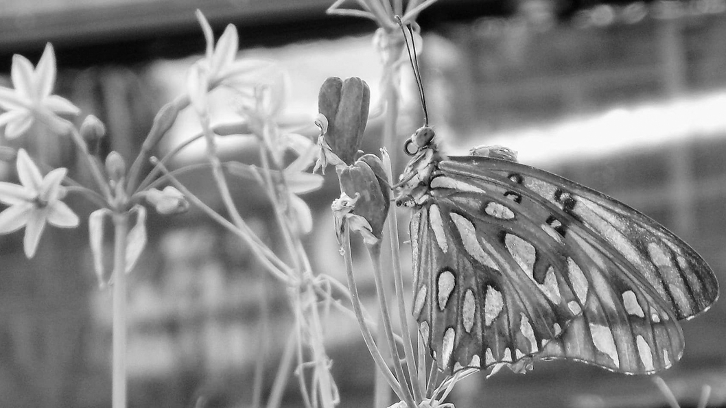 techos-verdes-insectos-benéficos-mariposa