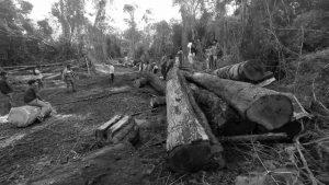 Comunidades guaraníes luchan contra el desmonte en Tekoa Ka'a Kupe