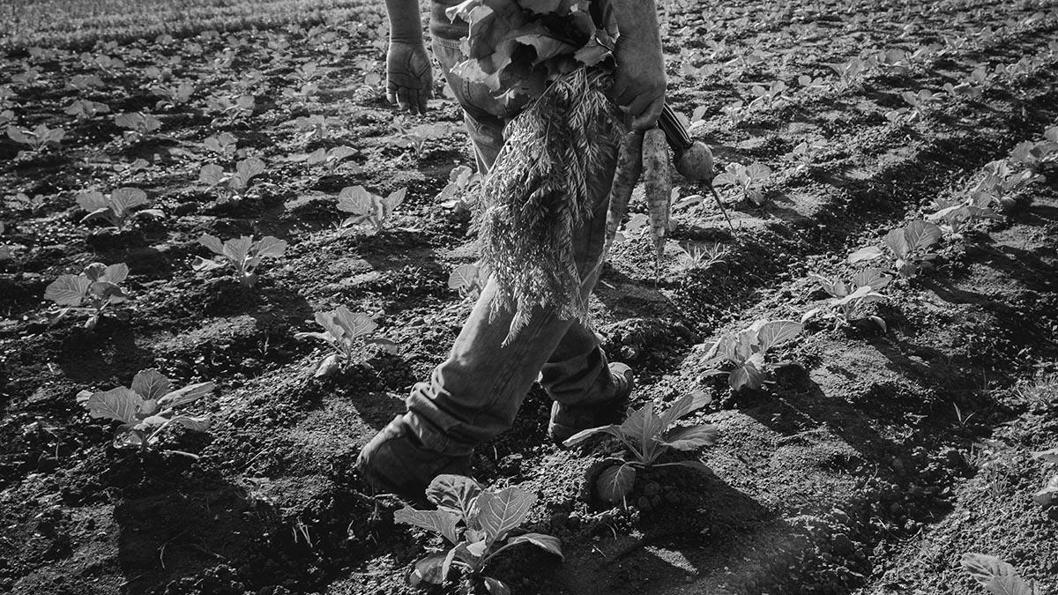 agroecología-tierra-alimento-campo