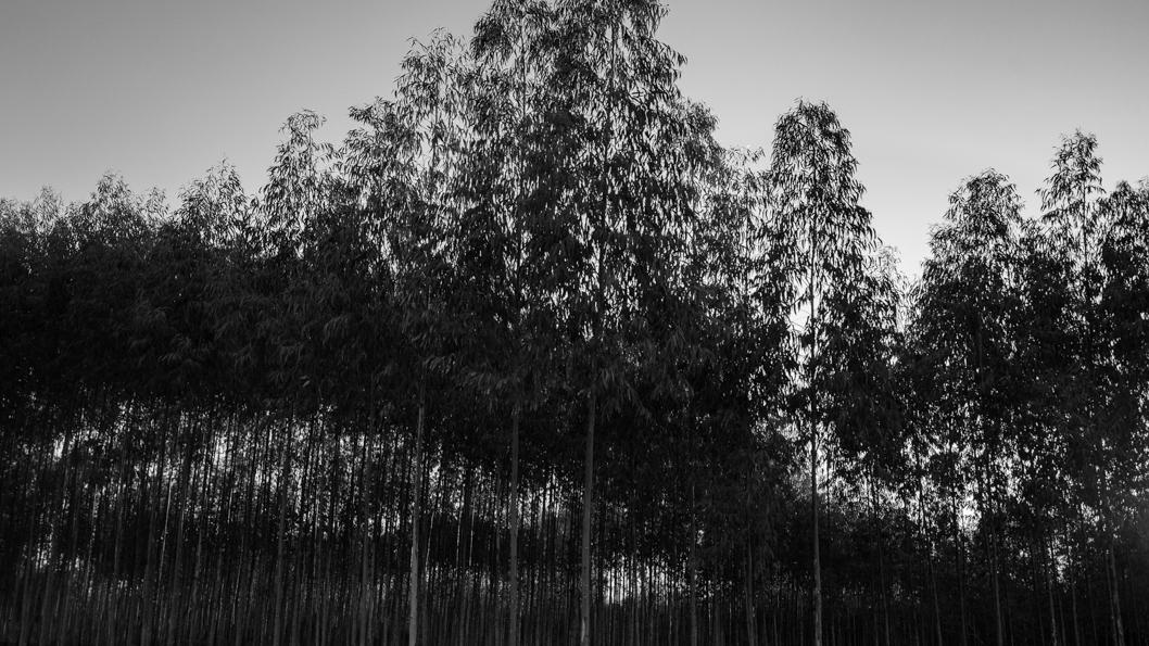 agua-paraguay-bosque-4