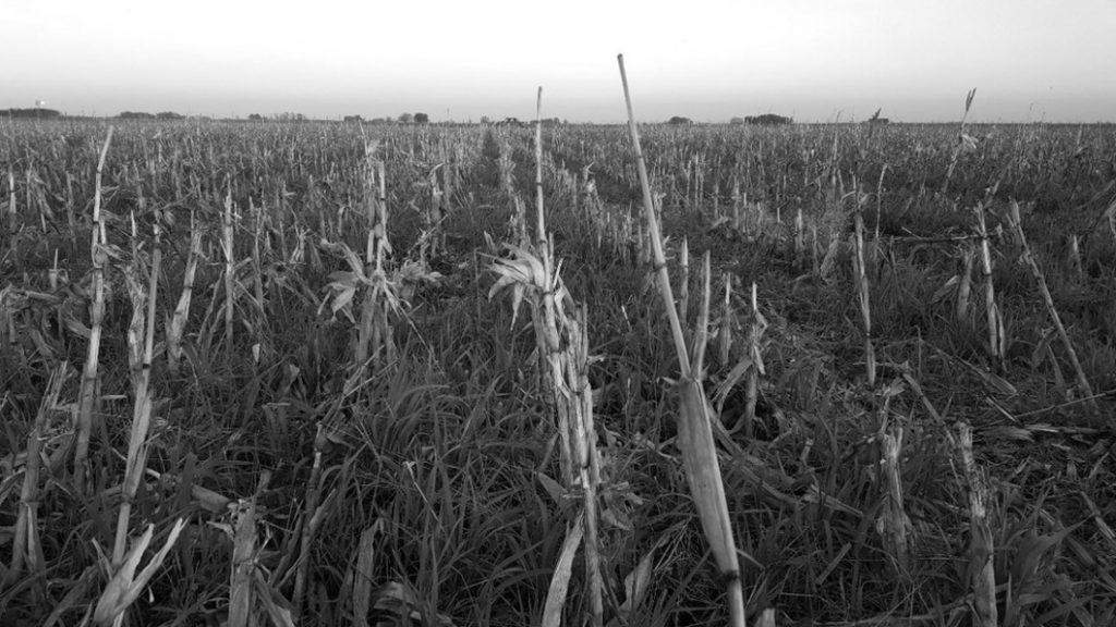 campo-La-Primavera-Buenos-Aires-agroecoloía
