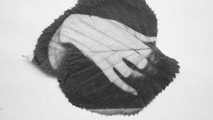 Ariana Kletzel y sus cianotipias sobre soportes vegetales