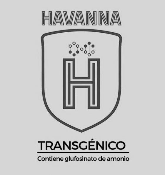 havanna-trangénico-trigo