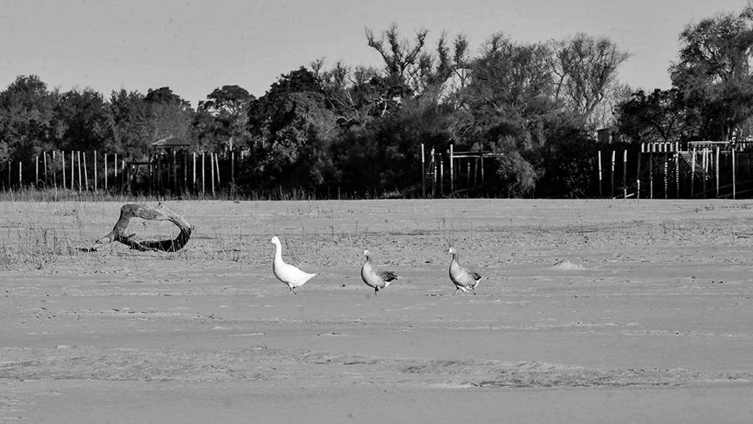 bajante-rio-paraná-litoral-agua-sequía-crisis-climática-3