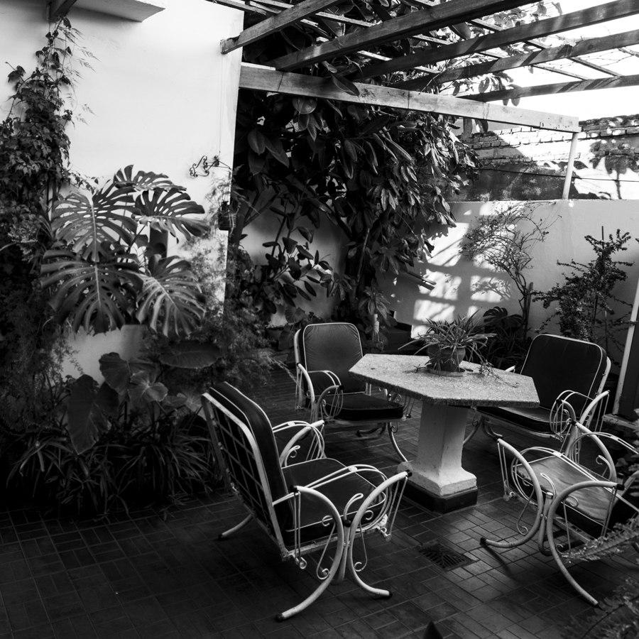 jardín-patio-plantas