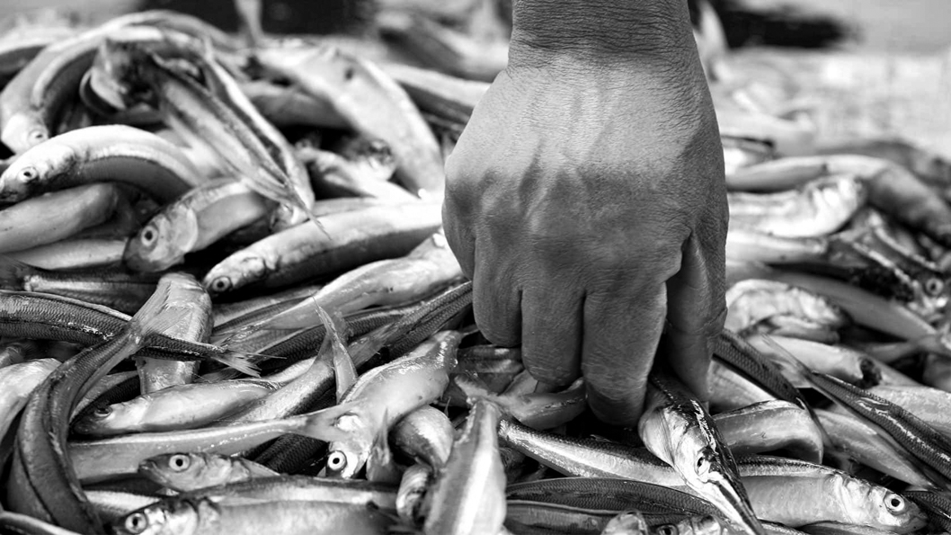 metales-peces-embalse-Río-Tercero-3
