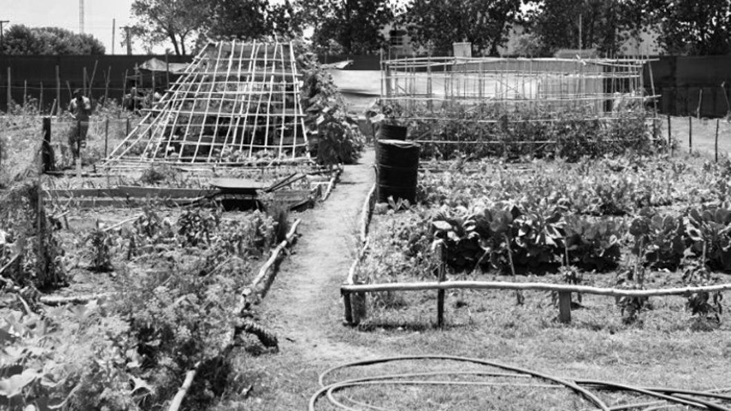 programa-agricultura-urbana-rosario-agroecología-2