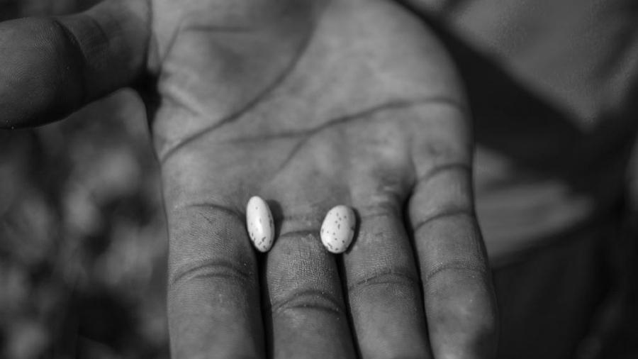 Sudafrica semillas comunitarias la-tinta