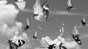 Insecticidio, el ocaso de la flora intestinal del planeta