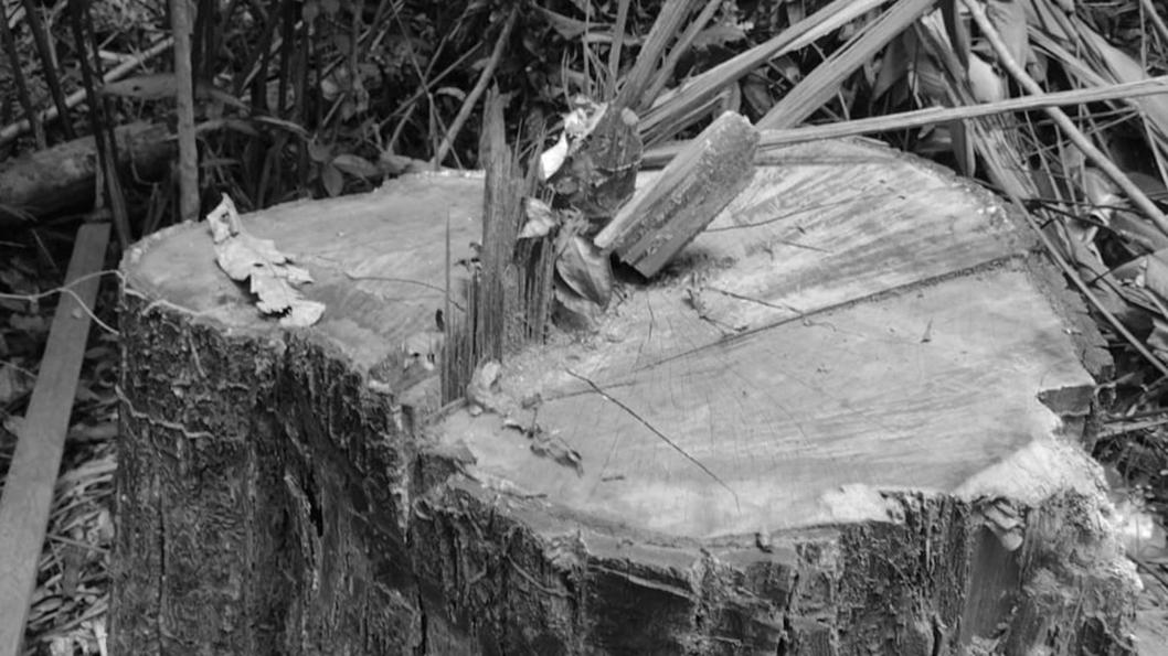 indígenas-awa-guajá-Brail-Amazonas-pueblos-originarios-18