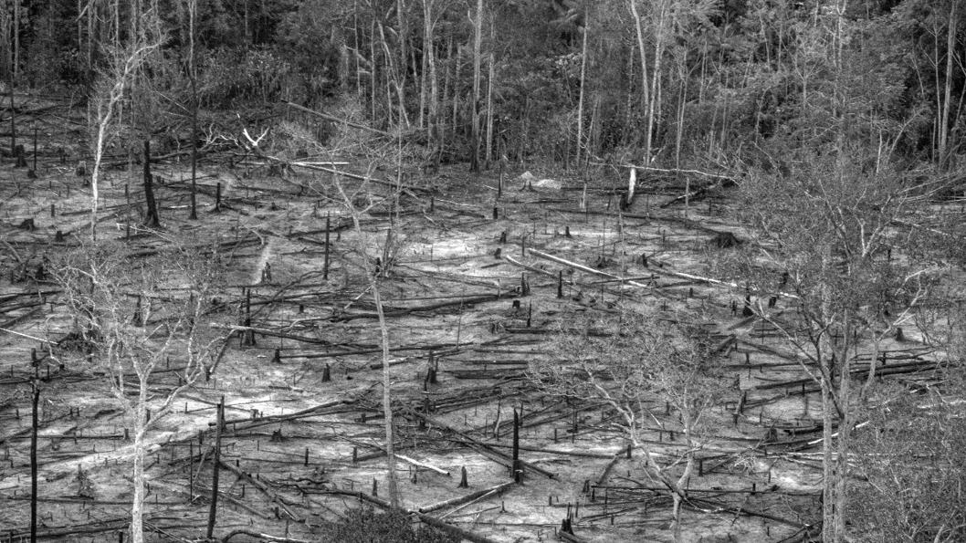 indígenas-awa-guajá-Brail-Amazonas-pueblos-originarios-grupo-guajajara-4