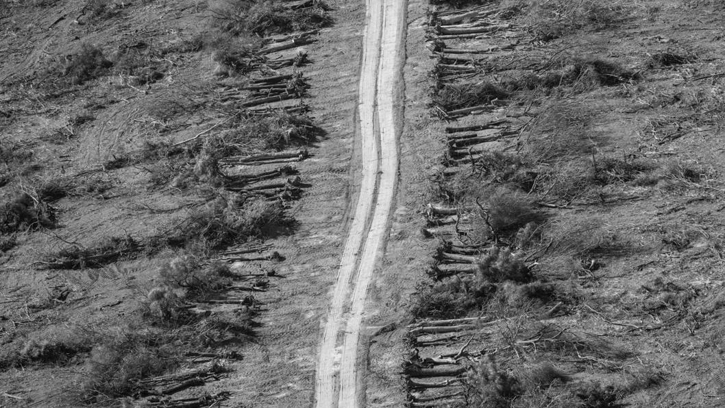 chaco-desmonte-bosque-3