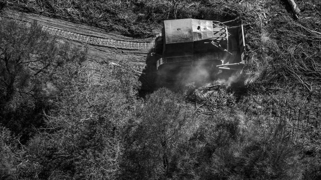 chaco-desmonte-bosque-8