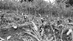 América toxina: agronegocio, infancias y violencias